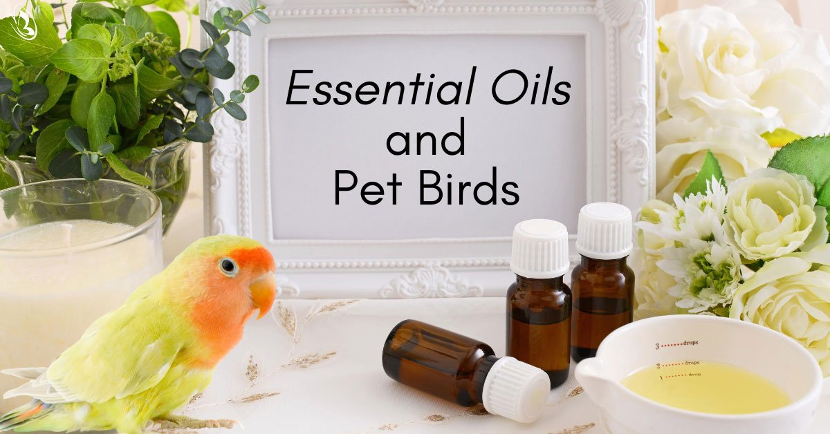 Essential Oils and Pet Birds