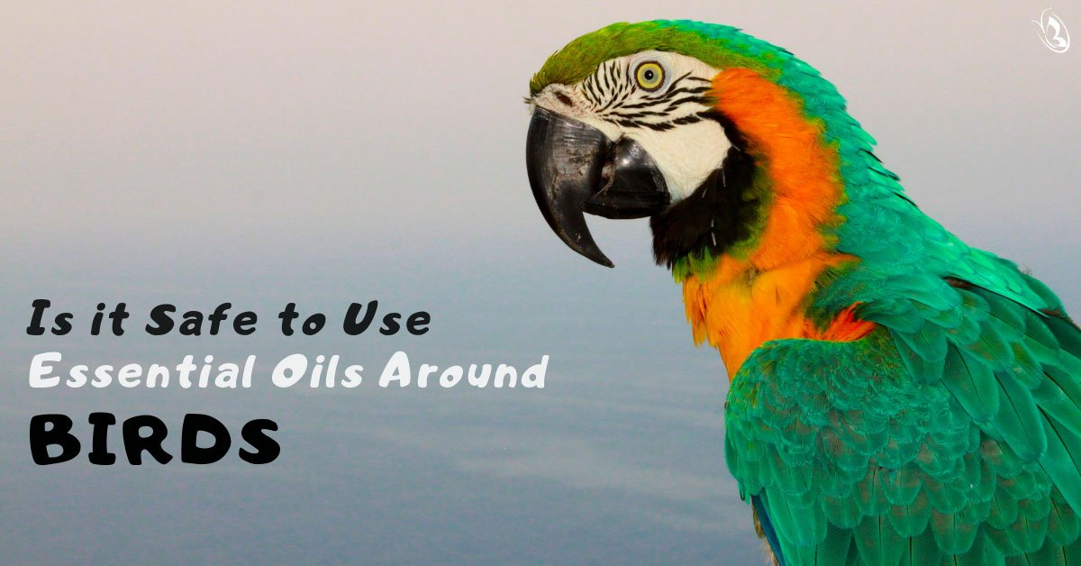 Is it Safe to Use Essential Oils Around Birds