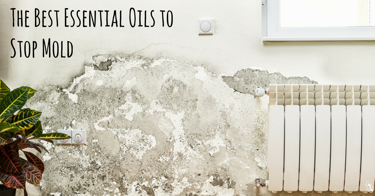 The Best Essential Oils to Stop Mold
