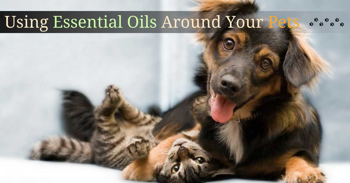 Using Essential Oils Around Your Pets
