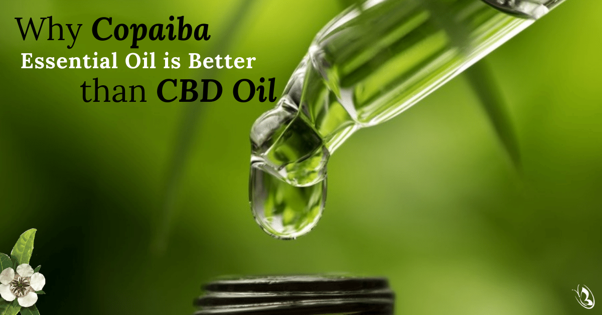 Why Copaiba Essential Oil is Better than CBD Oil