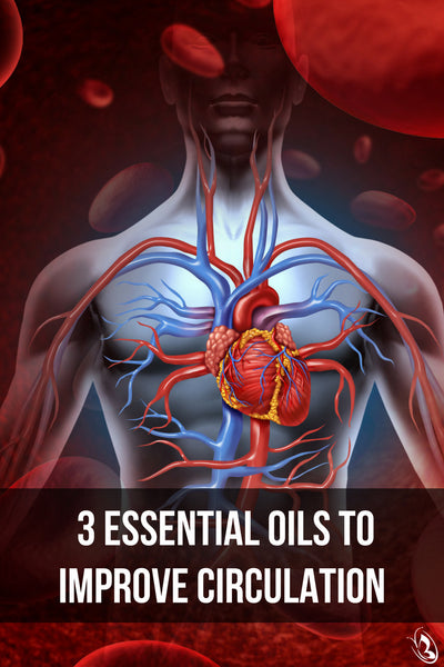 Essential Oils to Improve Circulation Pinterest