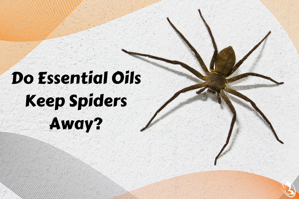 Keep Spiders Away with Essential Oils