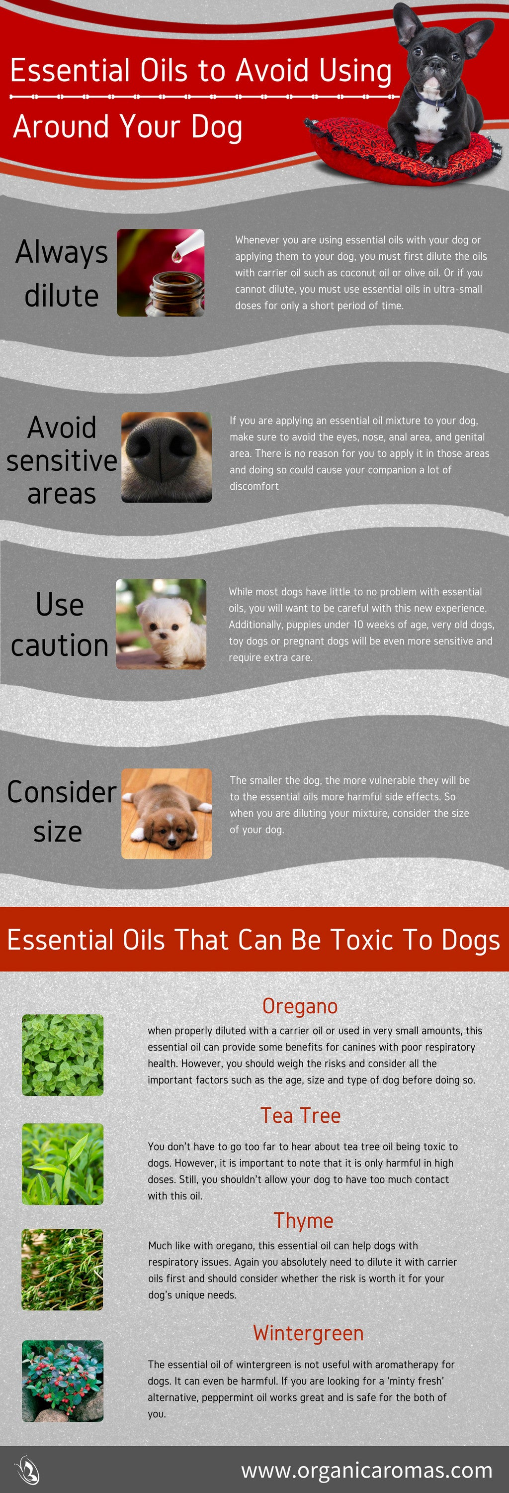 Essential Oils to Avoid und Your Dog Info-graphic