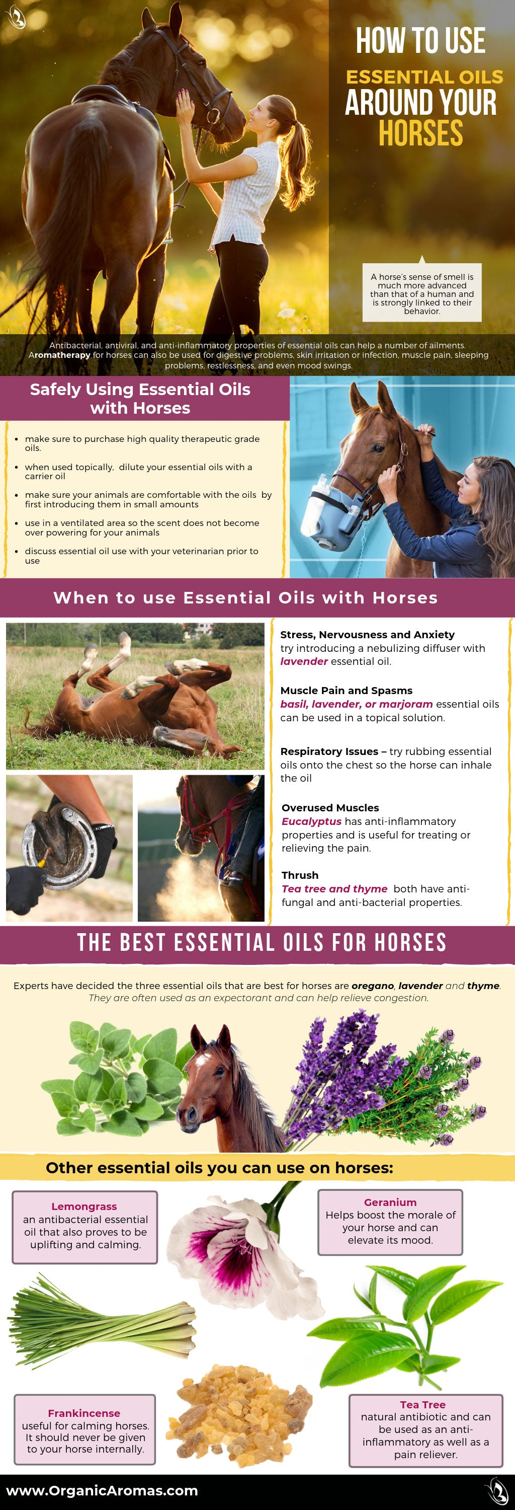 How To Use Essential Oils Around Your Horses Organic Aromas