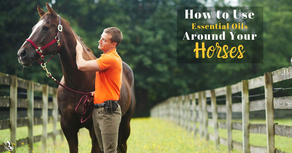 How to Use Essential Oils Around Your Horses