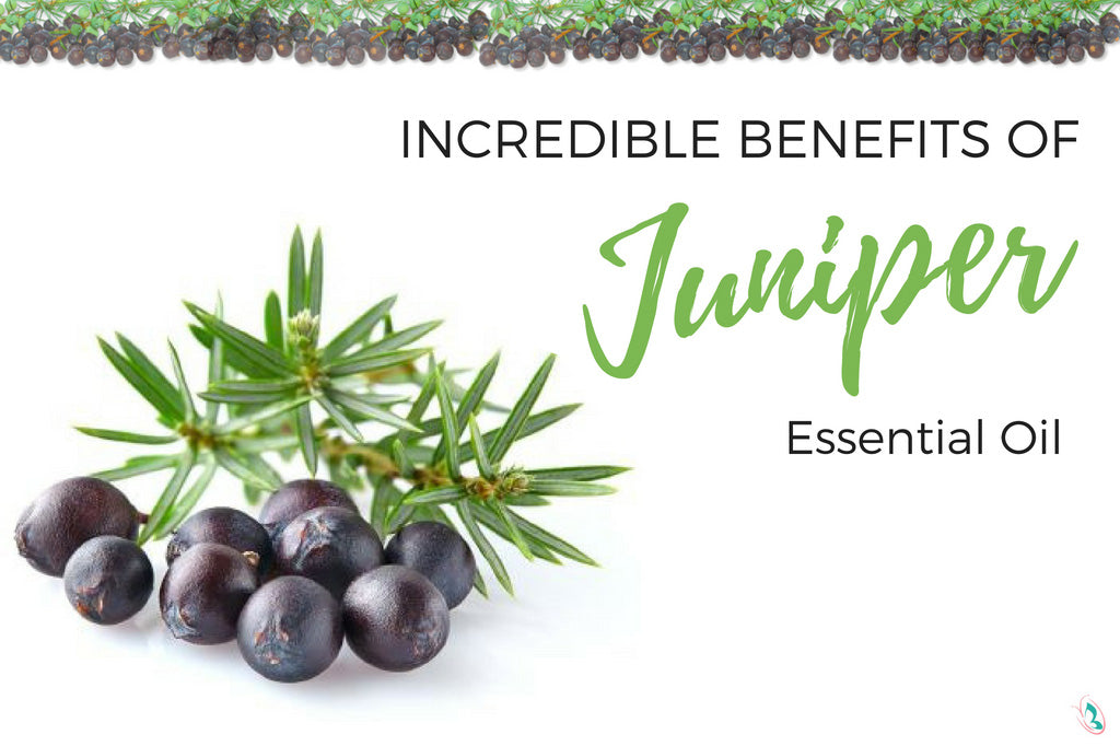 Incredible Benefits of Juniper Essential Oil