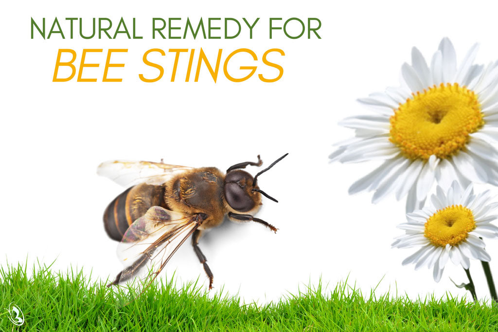 Natural Remedy for Bee Stings