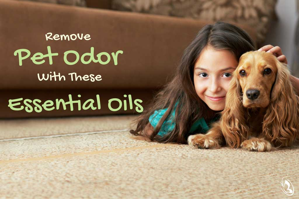 Remove Pet Odor with Essential Oils