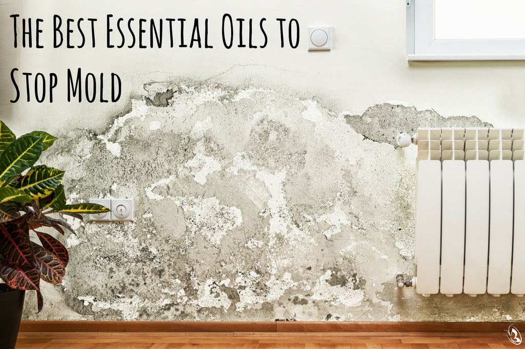 Essential Oils to Stop Mold