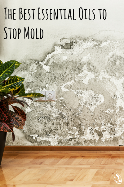 Stop Mold With Essential Oils Pinterest