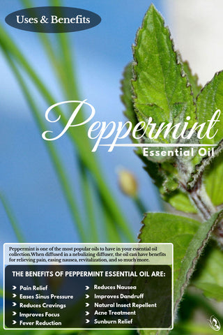 Top 10 Peppermint Oil Benefits and Uses