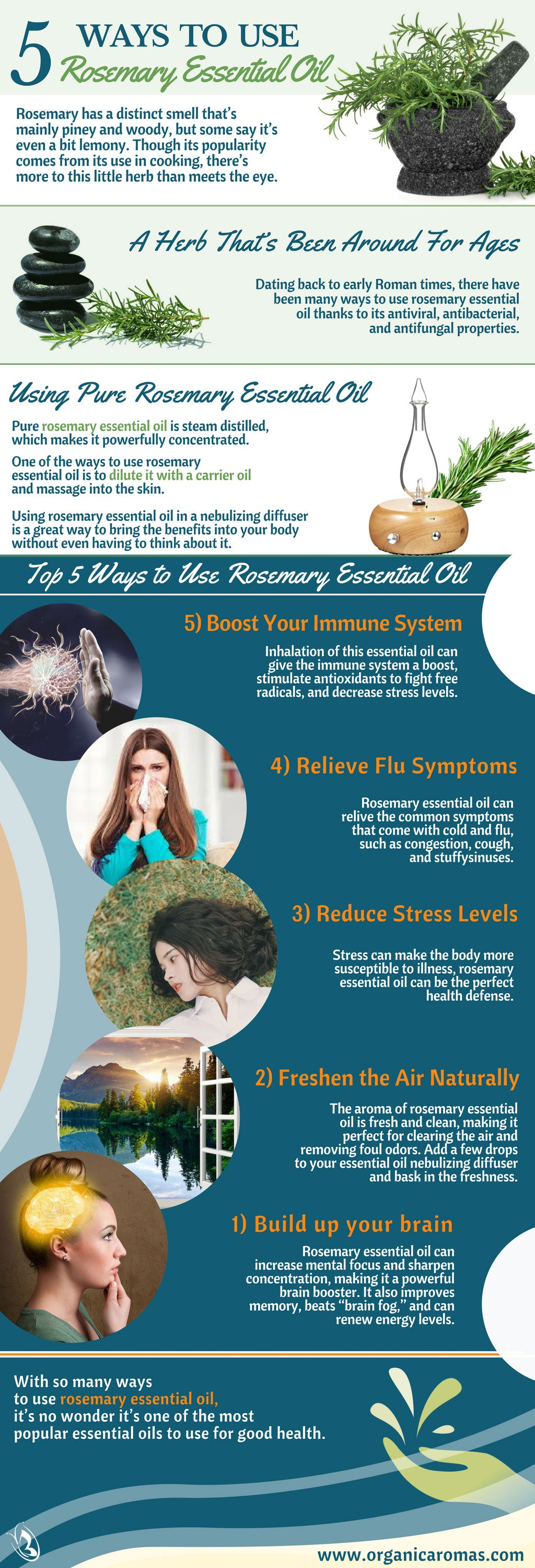Top 5 Ways to Use Rosemary Essential Oil - Organic Aromas