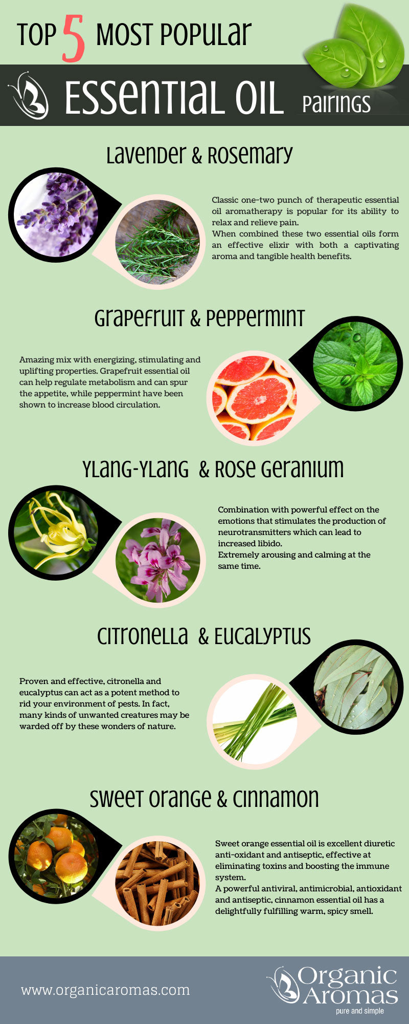 Top 5 Most Popular And Useful Essential Oil Pairings Organic Aromas