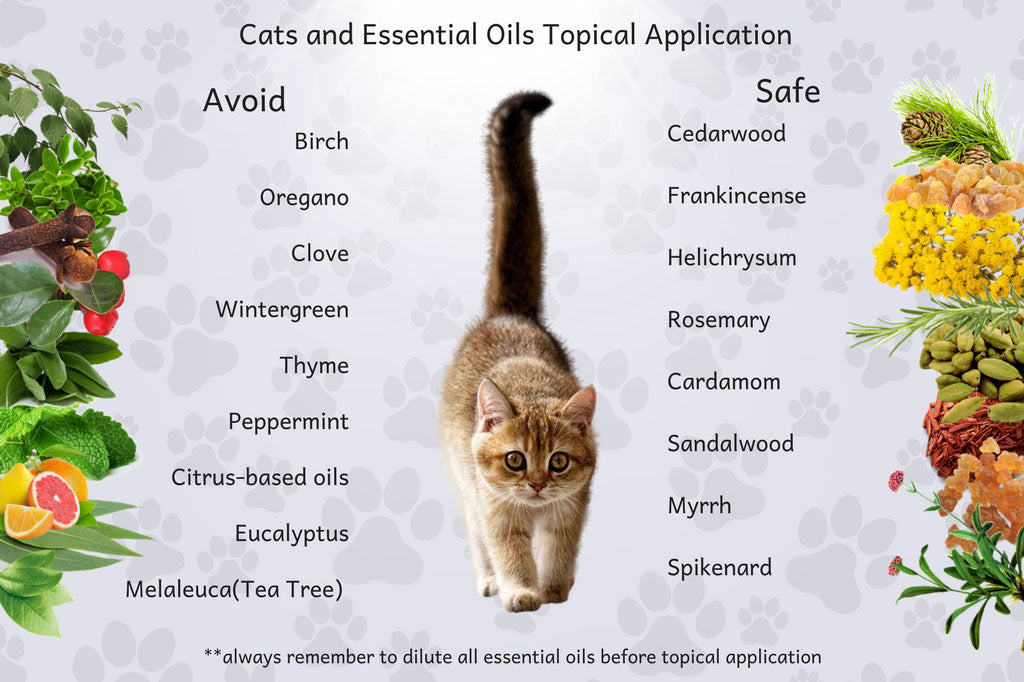 uncovering the truth about using essential oils with cats organic aromas. Black Bedroom Furniture Sets. Home Design Ideas