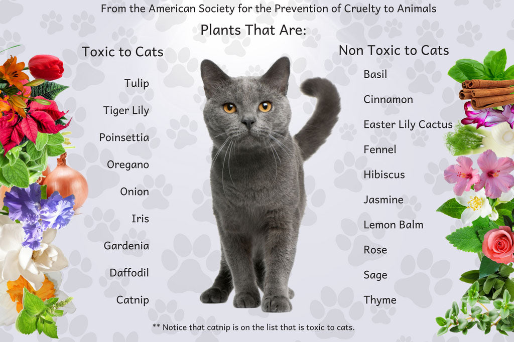 Uncovering The Truth About Using Essential Oils With Cats  - Plants
