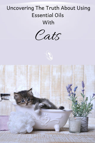 Uncovering The Truth About Using Essential Oils With Cats