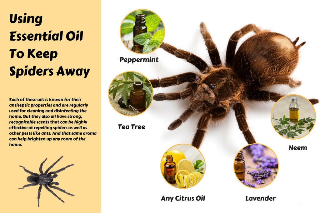 Do Essential Oils Keep Spiders Away Organic Aromas Custom How To Get Rid Of Spiders In Bedroom