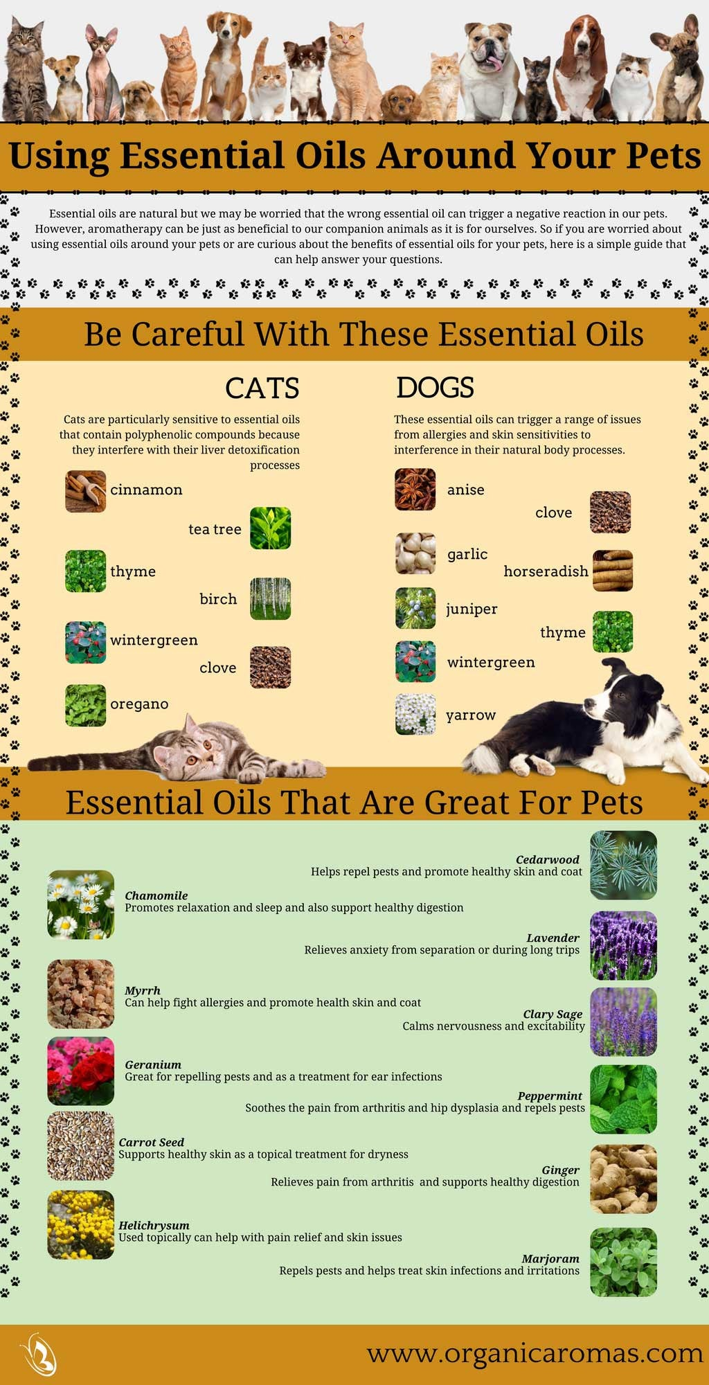 Using Essential Oils Around Pets Info-graphic
