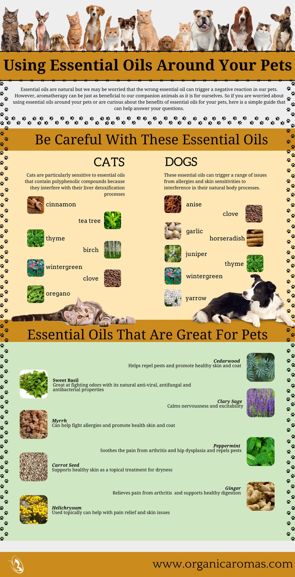 Essential Oils around Your Pets Info-graphic