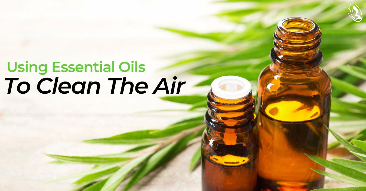 Using Essential Oils to Clean the Air
