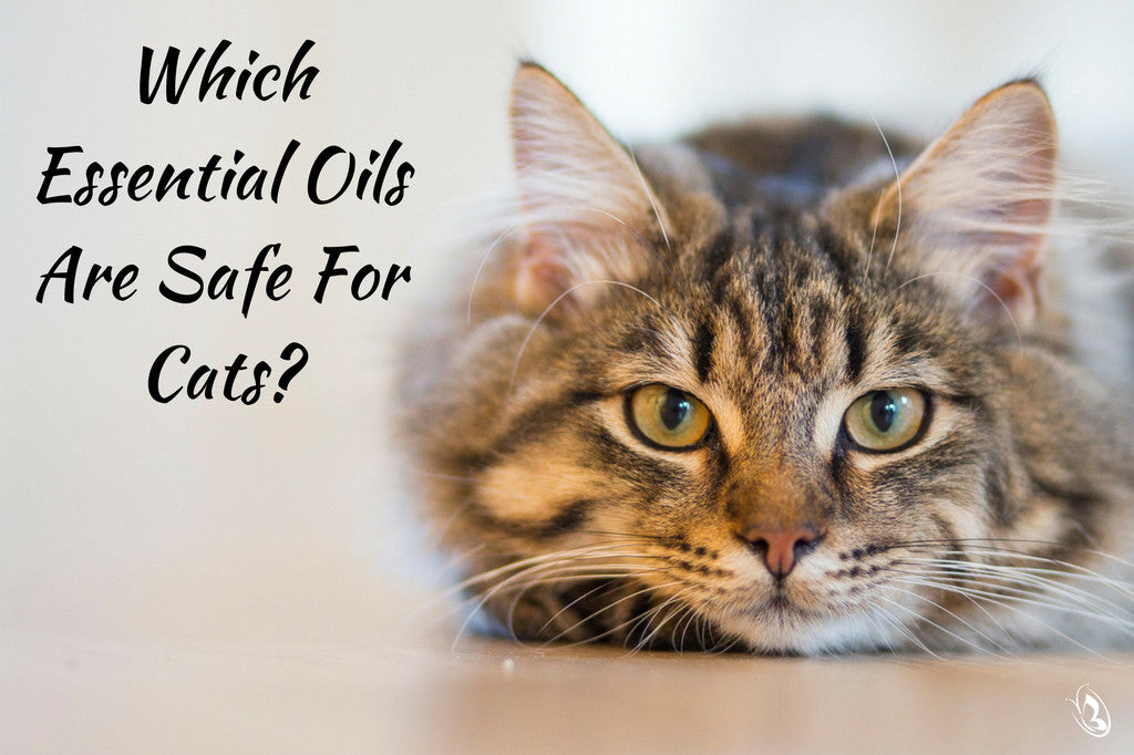 peppermint oil to deter cats