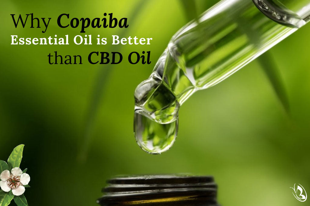 Why Copaiba Essential Oil is Better than CBD Oil - Organic Aromas