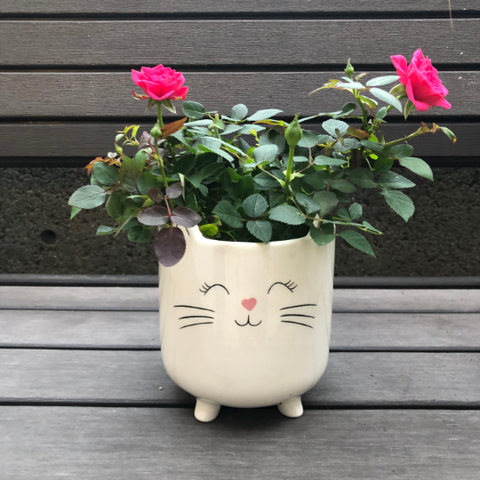 Large Cat Planter with a pink nose