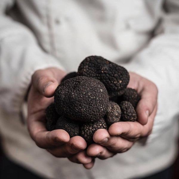 Black Truffle Melanosporum