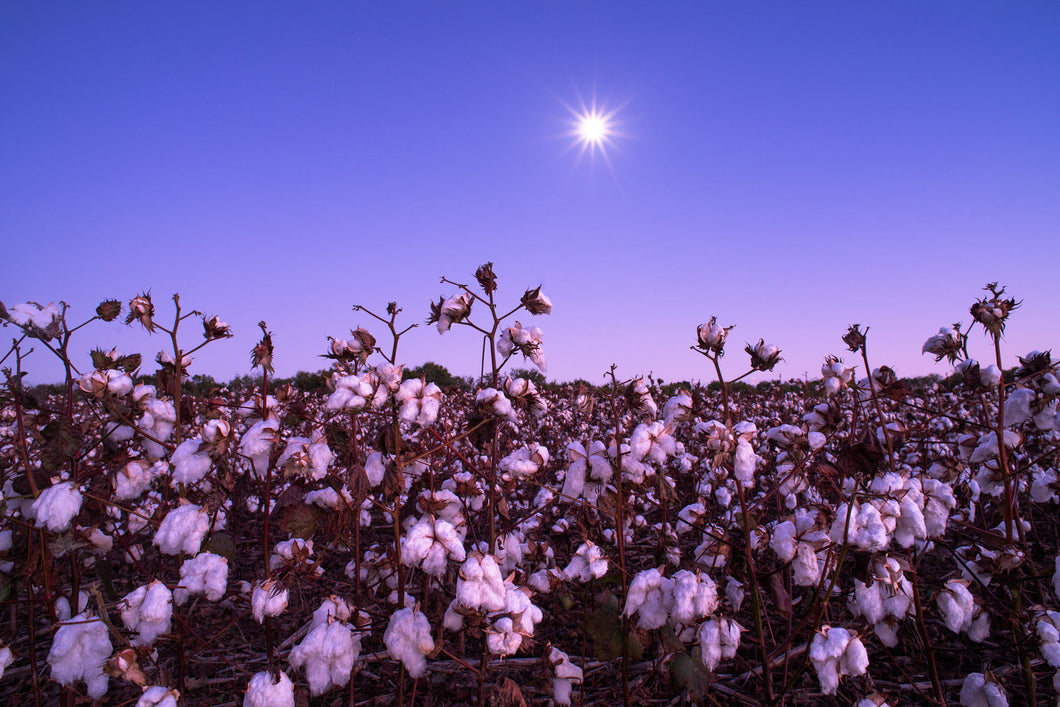 Under a Cotton Moon