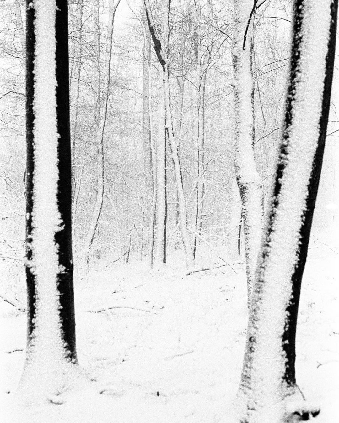 snowy forest caught on 35mm film