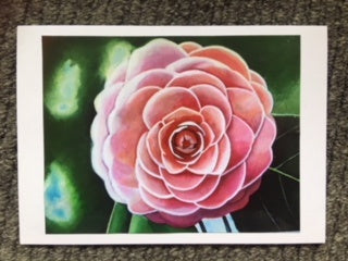 Card (Katie Callery): Camellia - Light Pink