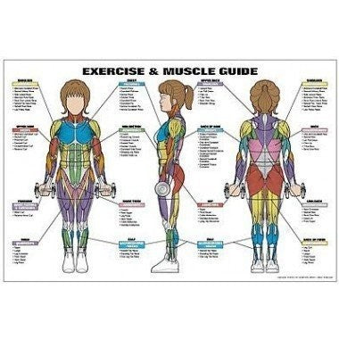 Exercise & Muscle Guide (Female)