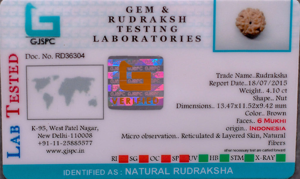Certified Best Quality 6 Mukhi Rudrakshas From Nepal