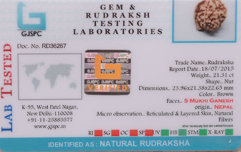 Image of Genuine Certified  Best Quality 5 Mukhi Rudrakshas From Nepal