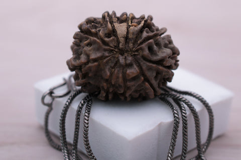 Image of 100% Best Quality Certified 10 Mukhi Rudraksha