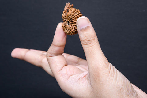 Image of Natural Original Nepali 21 Mukhi Rudraksha