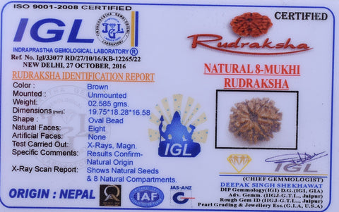 02.585 gm Loose Certified Natural  8 Mukhi Rudraksha