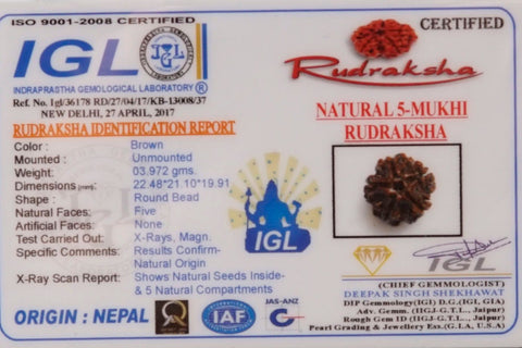 Image of Natural Best 5 Mukhi Rudrakshas From Nepal