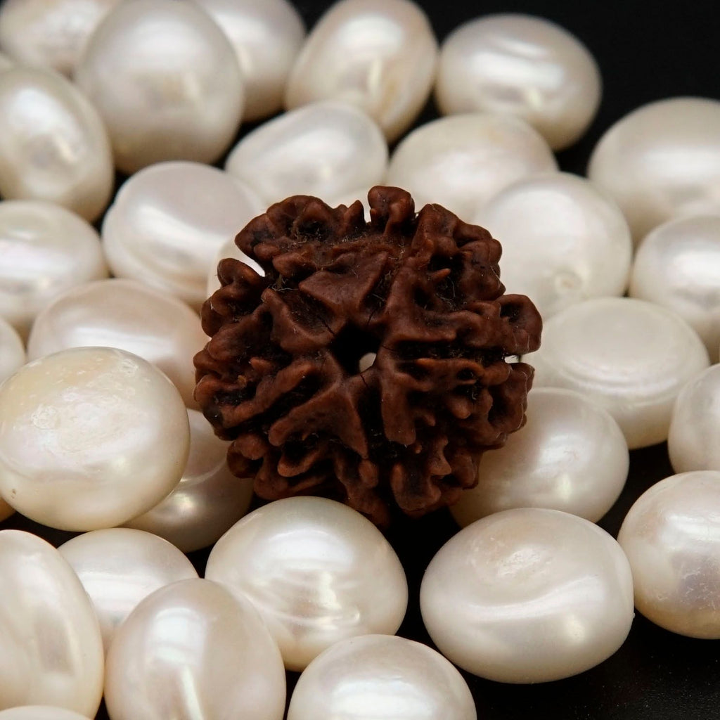 Natural Best 5 Mukhi Rudrakshas From Nepal