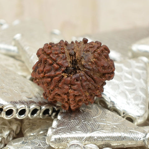 Unmounted Certified Best Quality 11 Mukhi  Rudraksha