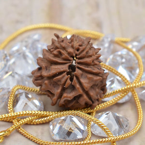 Faceted Natural Certified 11 Mukhi Rudraksha