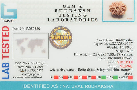 Image of Natural Nine Mukhi Rudraksha