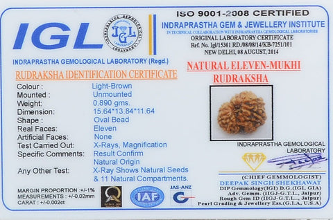 Image of Genuine Certified 11 Mukhi  Rudraksha