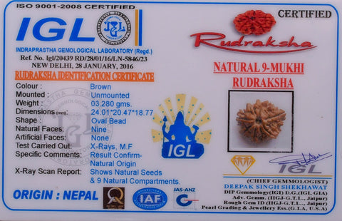 100% Real Certified Nine Mukhi Rudraksha
