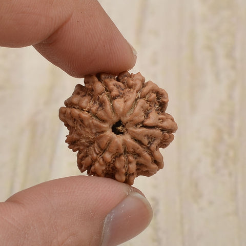 Image of Certified 8 Mukhi Rudraksha From Nepal