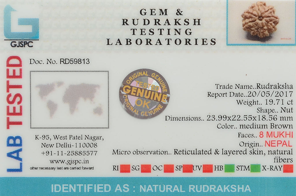 Certified 8 Mukhi Rudraksha From Nepal