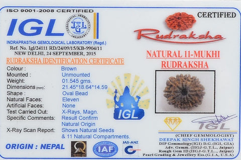 Genuine Natural Certified  11 Mukhi Rudraksha