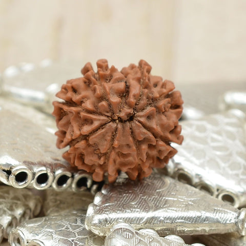 Unmouted Certified 100% Natural Nine Mukhi Rudraksha