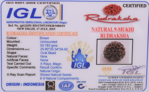 Image of 05.783 gm Nine Mukhi Rudraksha